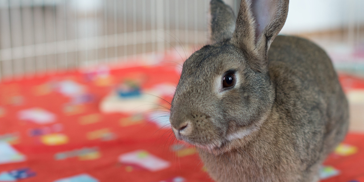 Rescues and Shelters | Triangle Rabbits