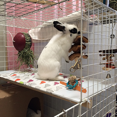 Active bunny with enrichment opportunities