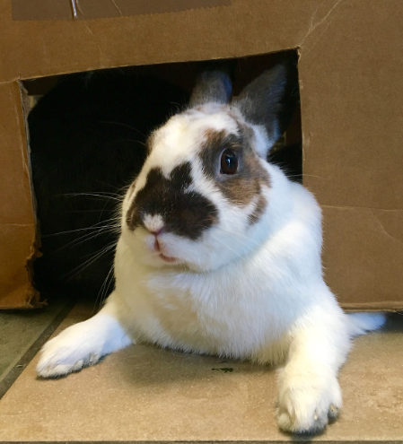 rabbit in box