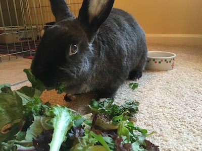 Willow enjoying her salad