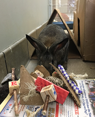 Bunny with toys
