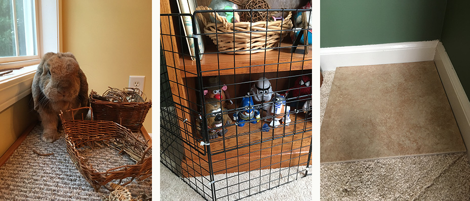 Left: Give rabbits toys to destroy so they do not destroy your furniture. Center: Wire cubes may be made into fences to protect furniture and belongings. Right: A tile in the corner of the carpet can protect rabbits from digging and pulling up the carpet.